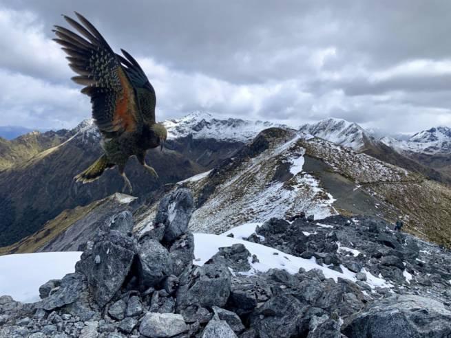 Israeli Photographer Wins 2020 iPhone Photo Award For Stunning New Zealand Shot