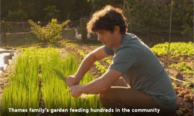 Thames family's market garden capable of feeding hundreds of people